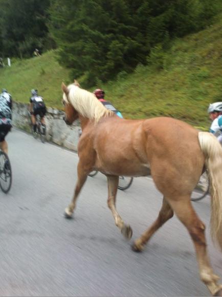 Pásla koně na betoně....