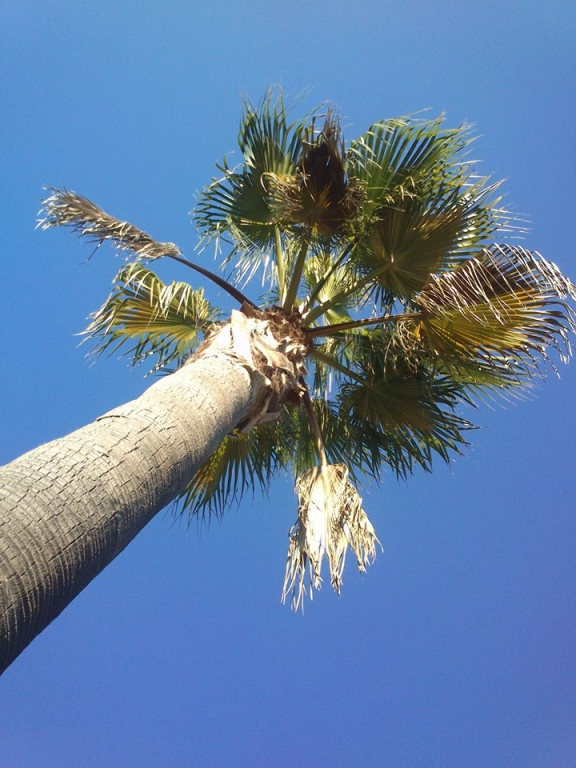 ... na palmě ...
